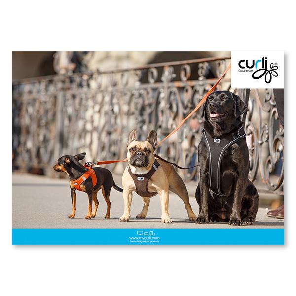Hart foam Poster 3 Dogs 39x55cm